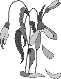 Картинки по запросу wilted plant clip art